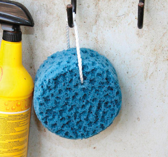 Tail Tamer Sponge on a Rope