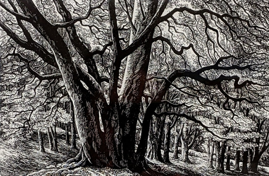 Edge of the Wood by Sue Scullard