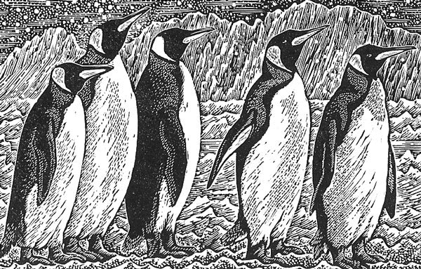 King Penguins *Out of stock