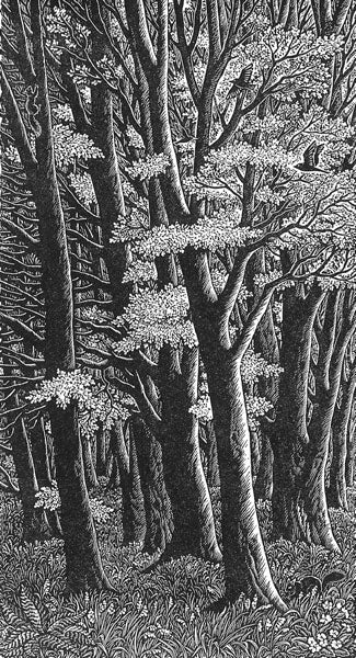 Tall Trees by Sue Scullard