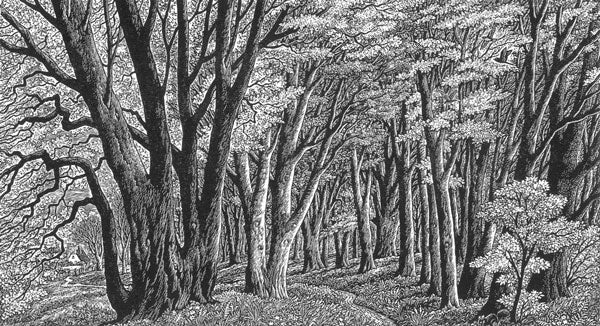 Through the Woods by Sue Scullard