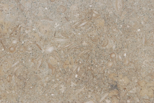 "Sea Grass Limestone Tile - 12"" x 12"" x 1/2"" Polished"