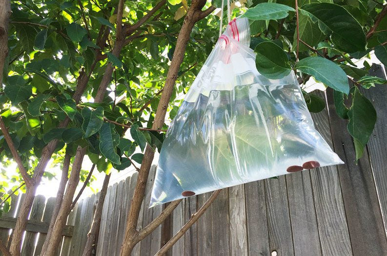 Ever Seen Bags of Water Hang From a Porch? Here's What That Means