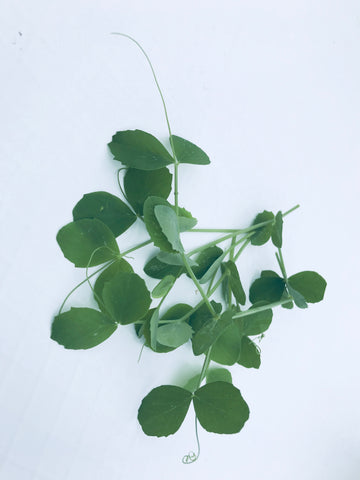Sugar Snap Pea Microgreens - 3 oz.