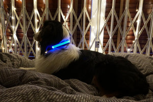 Illuminated Pet Light Up Collar