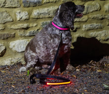 Illuminated Pet Light Up Lead
