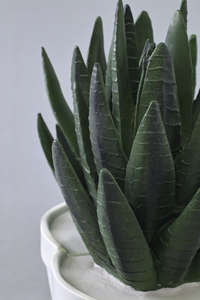 Agave Bookends