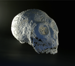 Lee Brogan Skull