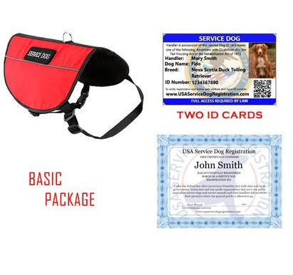 service dog basic image
