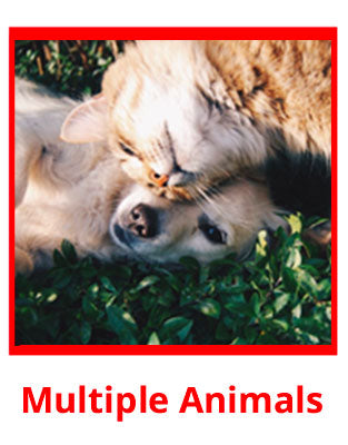 Service Dog Image Example