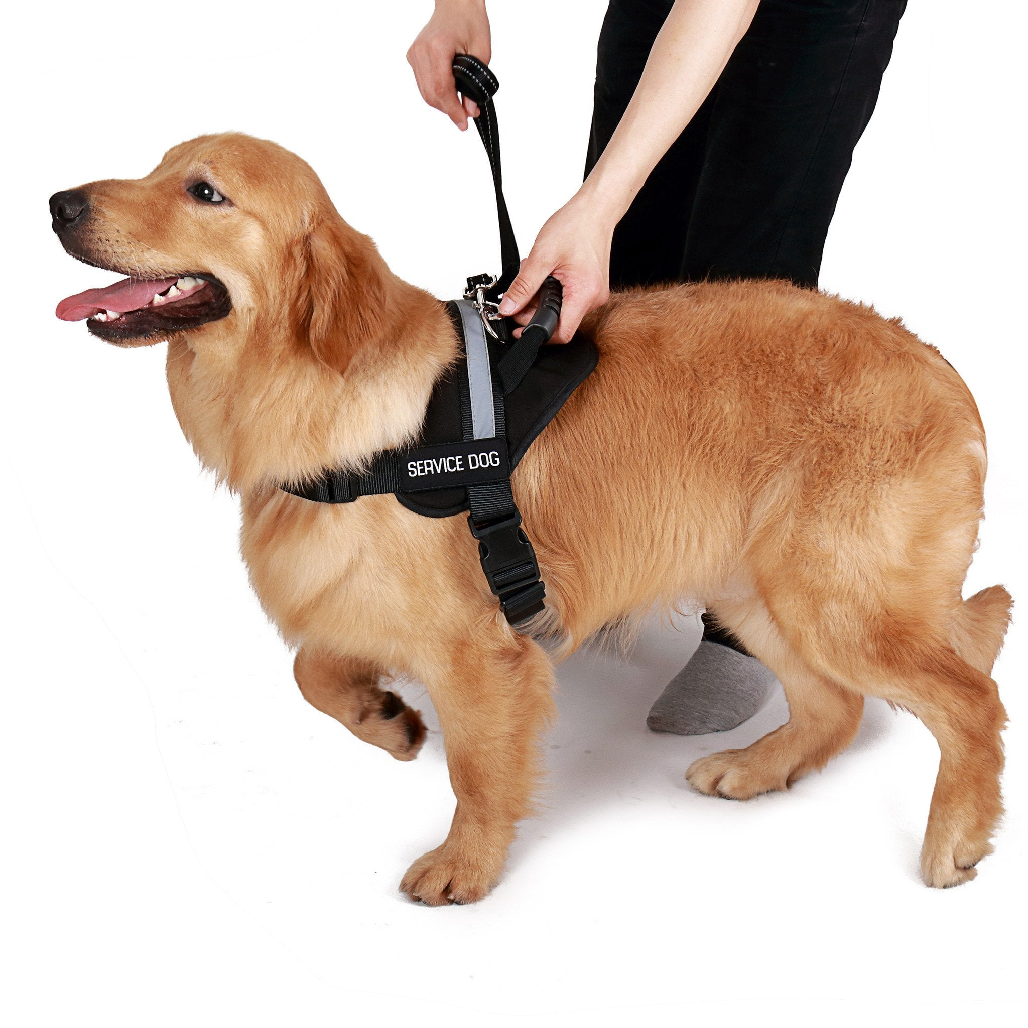 Service Dog Vest w/ Handle Basic Registration Package ($170 Value