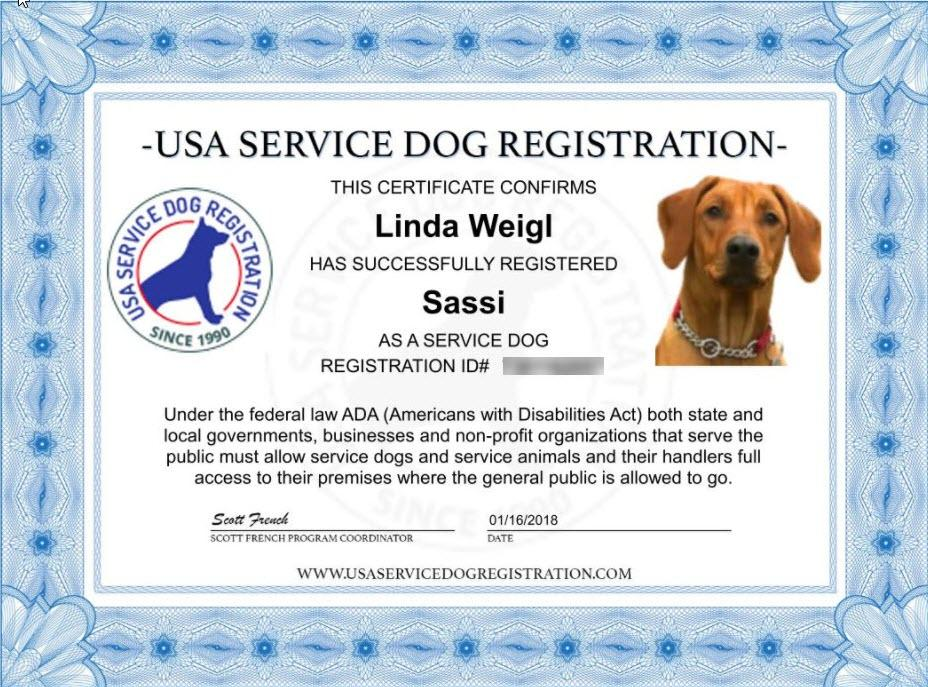 Essays on service dogs
