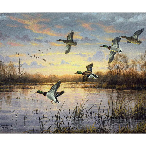 Fish and Fowl First Light Mallards Panel by Riley Blake Designs - Outdoors Birds Ducks Lake - Quilting Cotton Fabric
