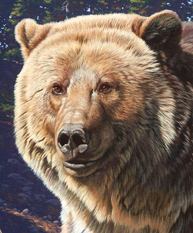 SALE Wild and Beautiful Panel Bear by Riley Blake Designs - Outdoors Recreation Wildlife - Quilting Cotton Fabric