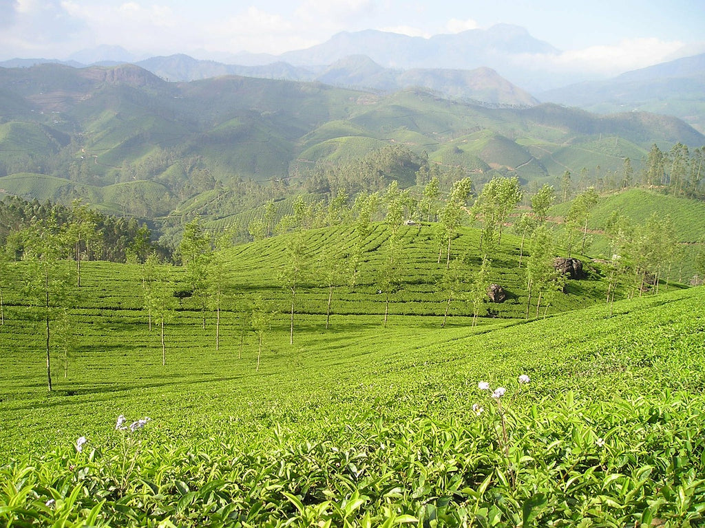 List of Tea Gardens in Darjeeling