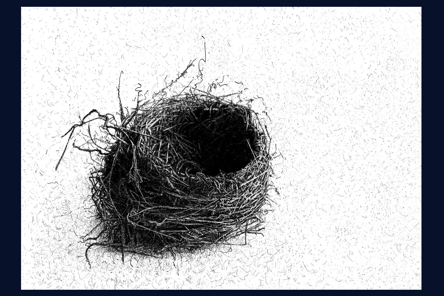 Blackbird Nest. Limited Edition of 50 Giclee Print