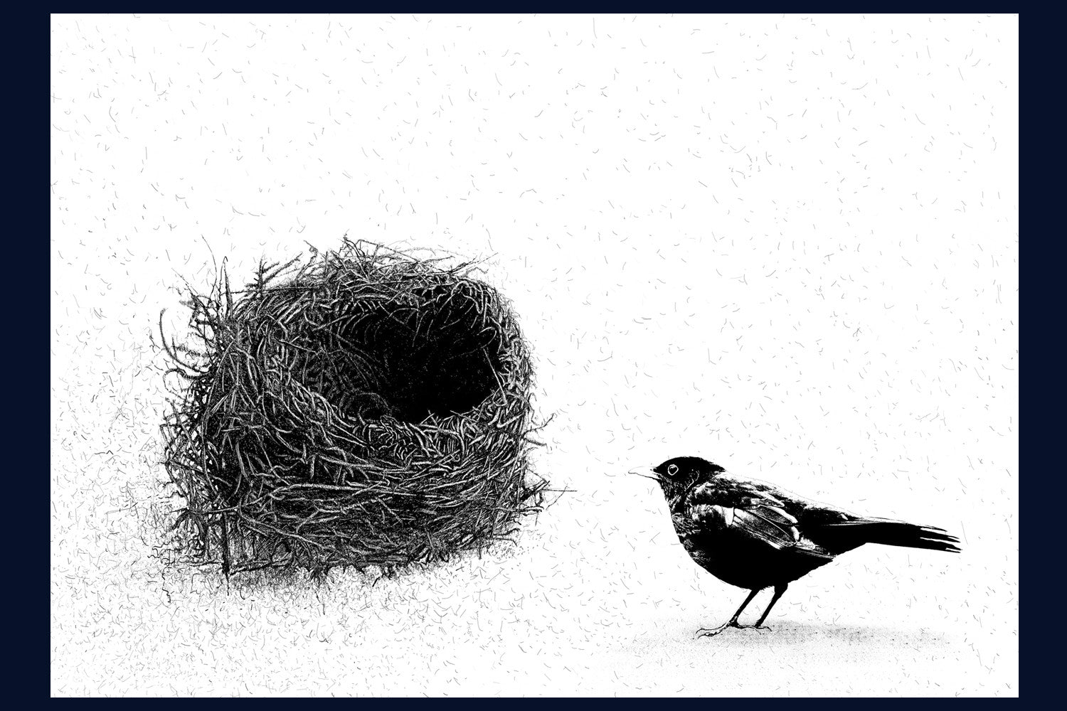 Home (Blackbird) Limited Edition of 50 Fine Art Print