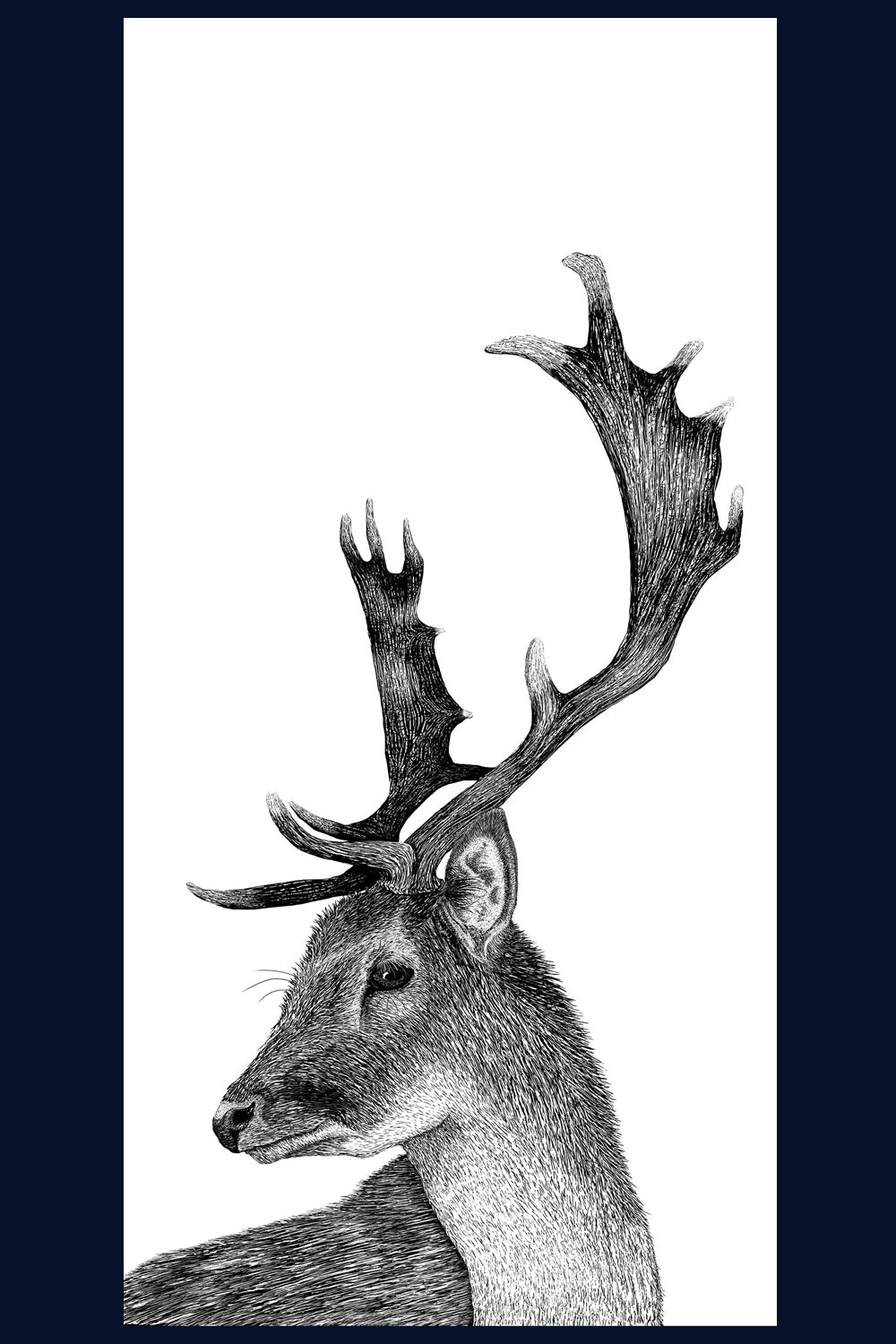 A Hard Stare: Stag. Limited Edition of 50 Fine Art Print
