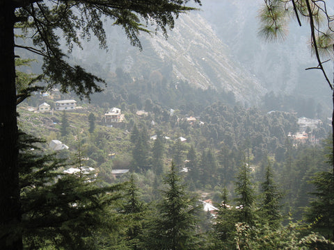 Limitless Experience- Mcleodganj and Dharamkot