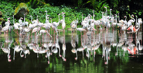Singapore: Transfers + City Tour + Jurong Bird Park + Night Safari