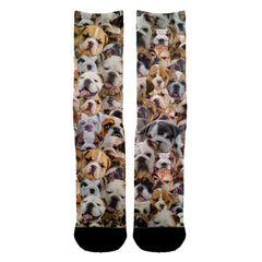 Bulldog Socks - Shweeet