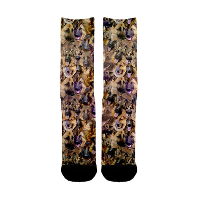 German Shepherd Faces Socks