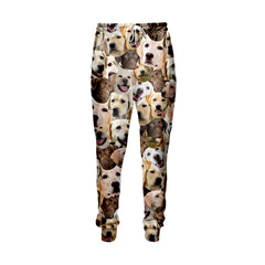 Labrador Retriever Faces Jogger Pants