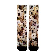 Labrador Retriever Faces Socks