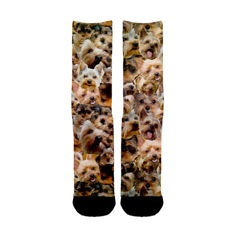Yorkshire Terrier Faces Socks