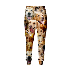 Golden Retriever Faces Jogger Pants