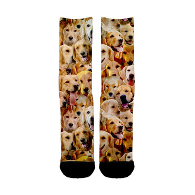 Golden Retriever Faces Socks