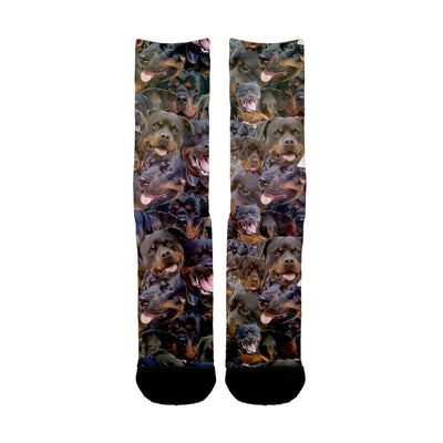 Rottweiler Faces Socks