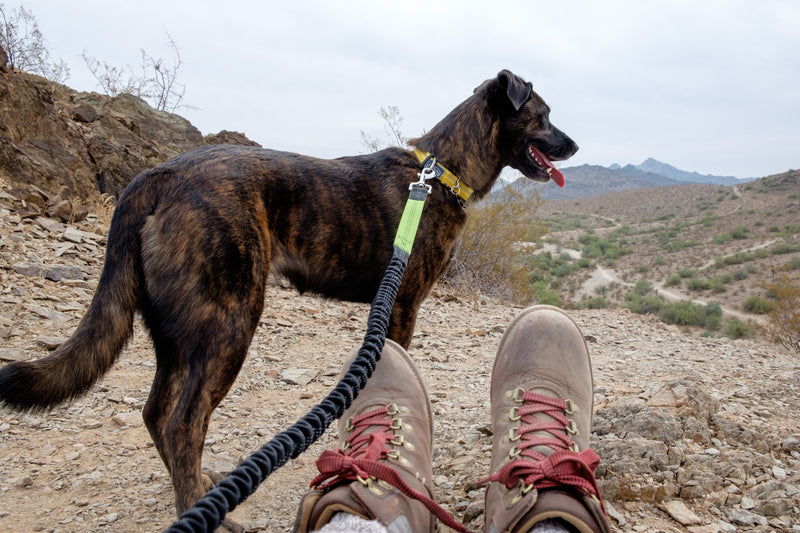 Best Gear for Hiking with Dogs