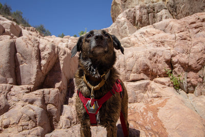 Tips For Hiking With Dogs in the Summer