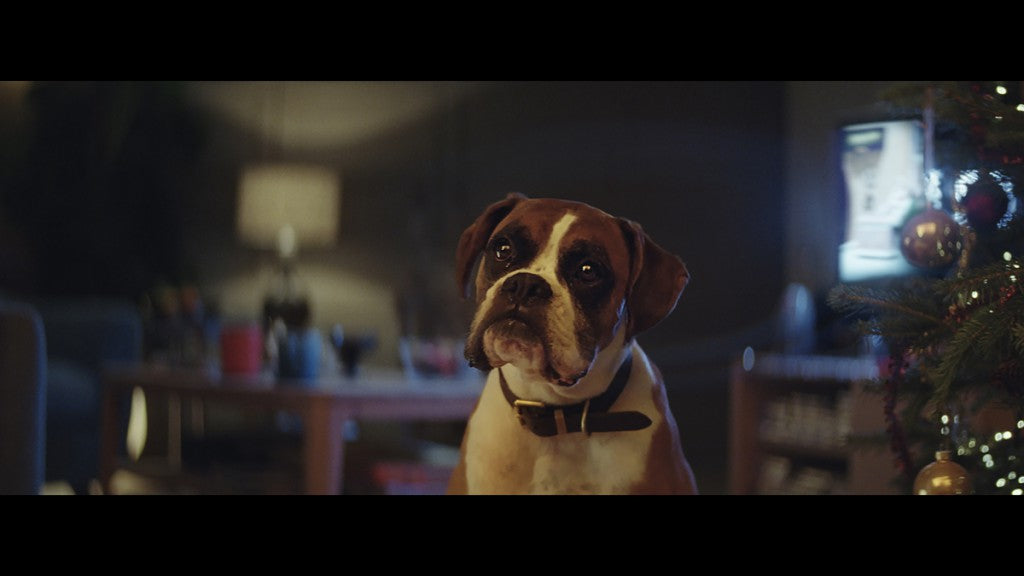 Buster-The-Boxer-John-Lewis-Christmas-Ad-07