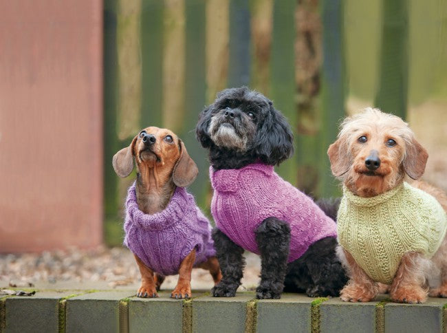 dogsinjumpers1
