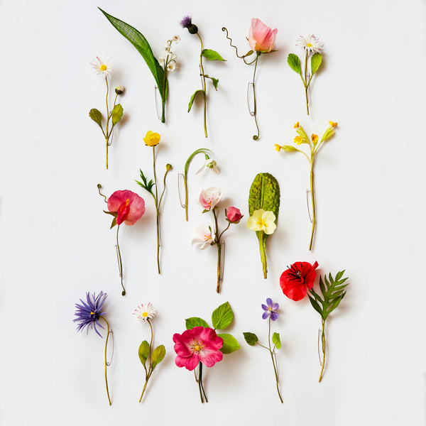 14 March 2020, 3D Botanicals with Anne Tomlin