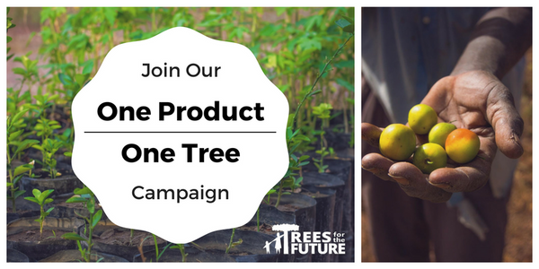 One Product - One Tree: How Do Your Purchases Help?