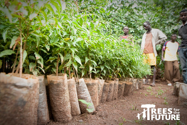 Planting trees with Trees for The Future