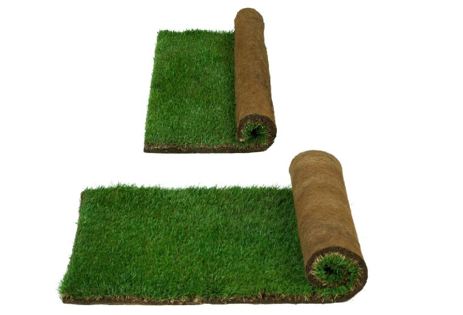 Farm Fresh Pet Grass