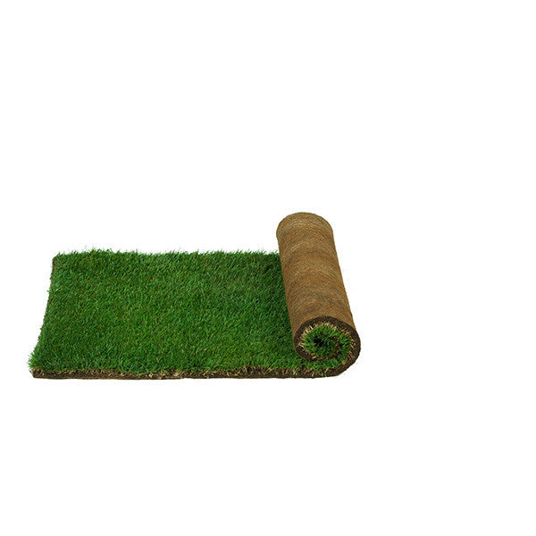Real Grass Potty - Large