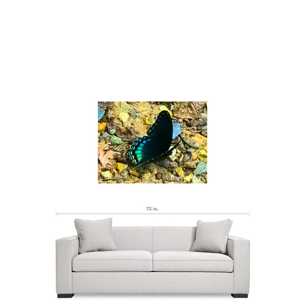 "Butterfly Rock - Canvas Wrap - 40"" x 30"""
