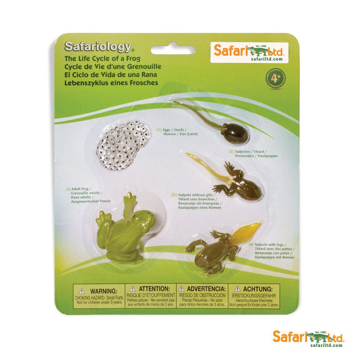 Painted Educational Replica Safariology Set - Life Cycle of a Frog