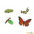 Painted Educational Replica Safariology Set - Life Cycle of a Monarch Butterfly