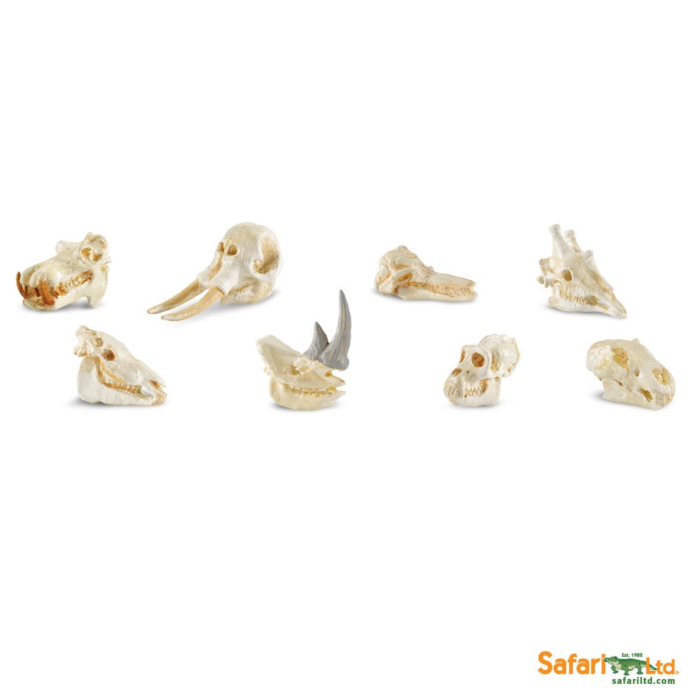 Safari Ltd TOOBS Painted Miniature Figure, 8 Pieces - Mammal Skulls