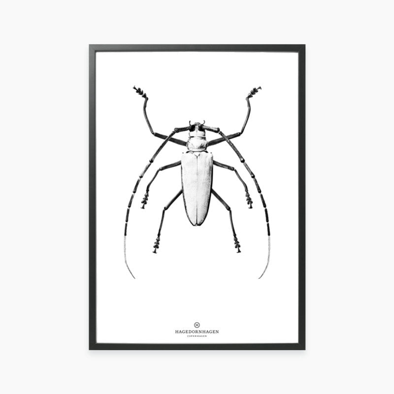 Hagedornhagen-White Beetle BW1 Poster-The Fjord Store