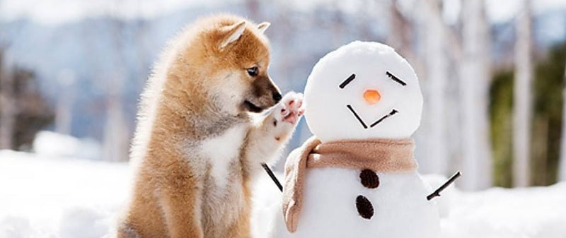 10 Adorable Clothes That Will Keep Your Dogs Warm and Cozy This Winter