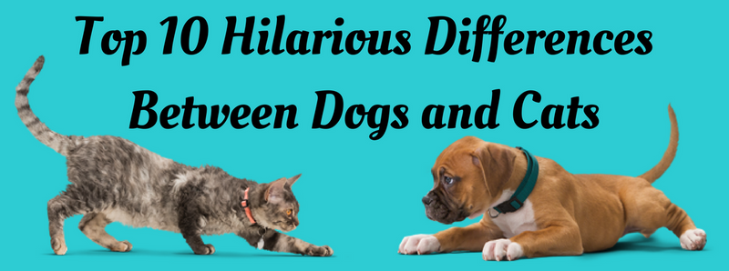 Top 10 Hilarious Differences Between Dogs and Cats