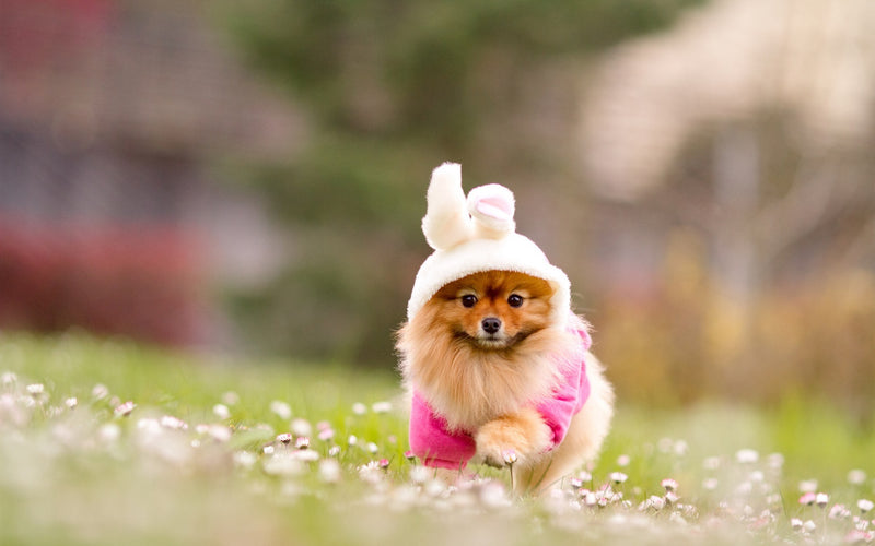Top 10 Lovely Dress Costume For Cute Little Pooches in 2019
