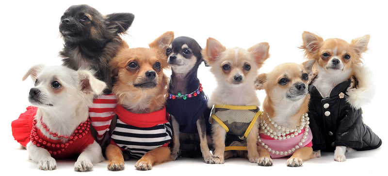 10 Cute And Adorable Dog Clothing Perfect For Summer